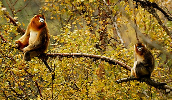 Bird Watching and Wildlife Travel in Southern Shaanxi and Western Sichuan